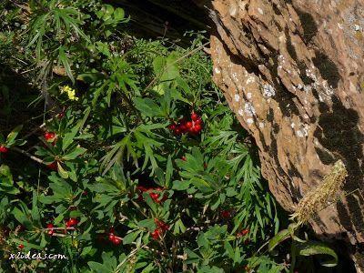 P1280493 - No es el botánico, es Ampriu.