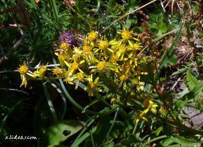 P1280494 - No es el botánico, es Ampriu.