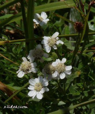 P1280498 - No es el botánico, es Ampriu.