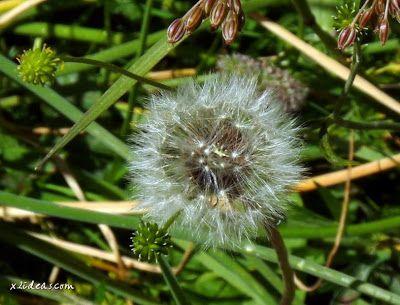 P1280502 - No es el botánico, es Ampriu.