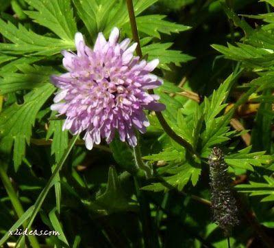 P1280504 - No es el botánico, es Ampriu.