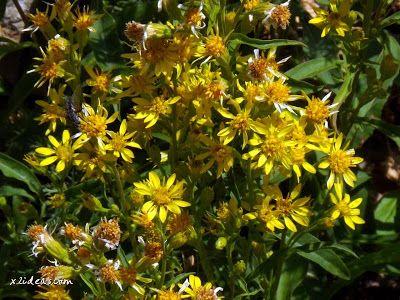 P1280505 - No es el botánico, es Ampriu.