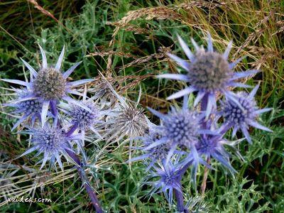 P1280551 - No es el botánico, es Ampriu.