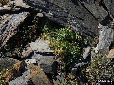 P1280905 - Paseo por el pico de Cibollés.