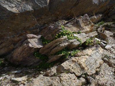 P1280978 - Paseo por el pico de Cibollés.