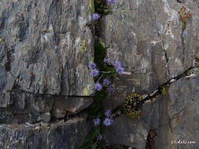 P1280989 - Paseo por el pico de Cibollés.