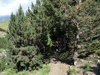 P1370525 - Ruta de las 3 Cascadas y Ardonés.