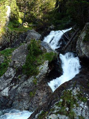 P1370582 - Sarrio pillado por el zoom, Valle de Benasque, Pirineos