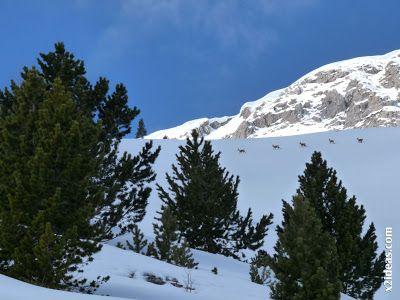 P1440093 - Sierra de Chía, de foqueo ... Valle de Benasque.