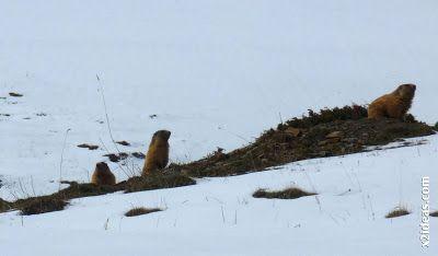 P1450261 - Gallinero después de nevar anoche.