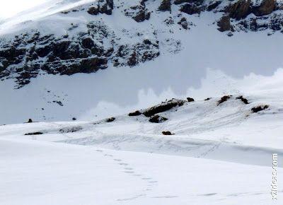 P1450265 - Gallinero después de nevar anoche.