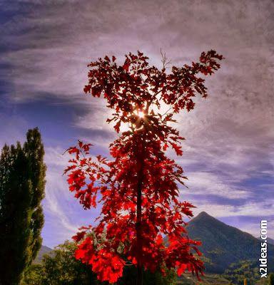 P1490989 - Coloreándose de Otoño, Cerler.