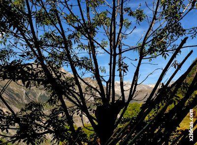 P1500050 - Coloreándose de Otoño, Cerler.