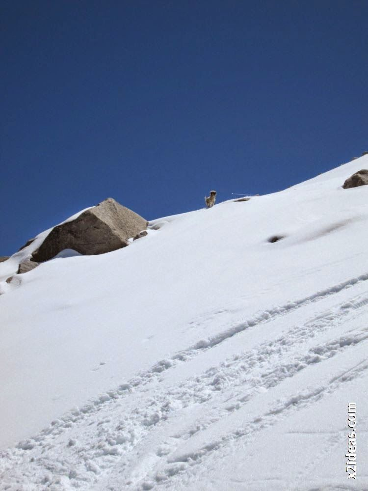IMG 0112 - Esquiando en el Glaciar de Maladeta en junio.