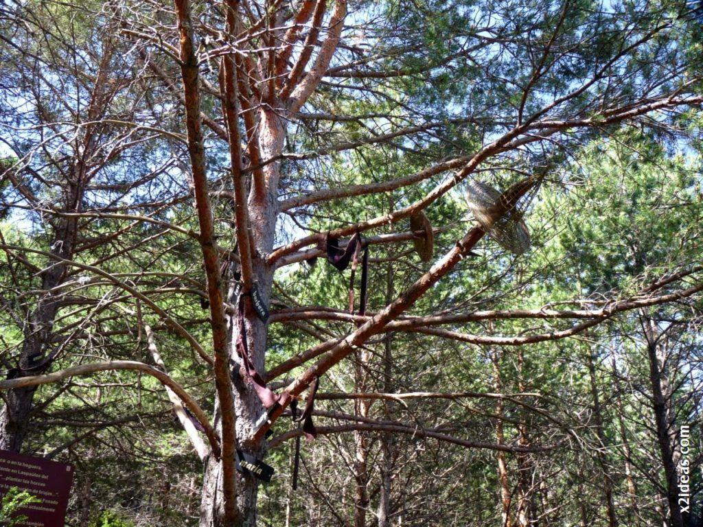 P1550141 1024x768 - Bosque de Brujas, Laspaúles.
