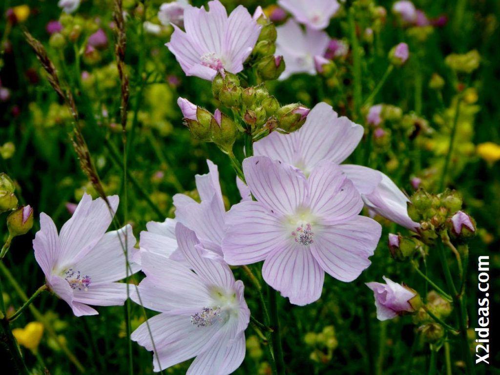 P1000786 1024x768 - Primavera o Verano da igual, Valle de Benasque, Pirineo.