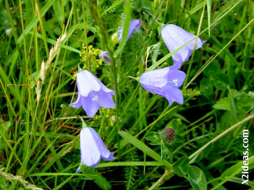 P1000800 1024x768 - Primavera o Verano da igual, Valle de Benasque, Pirineo.