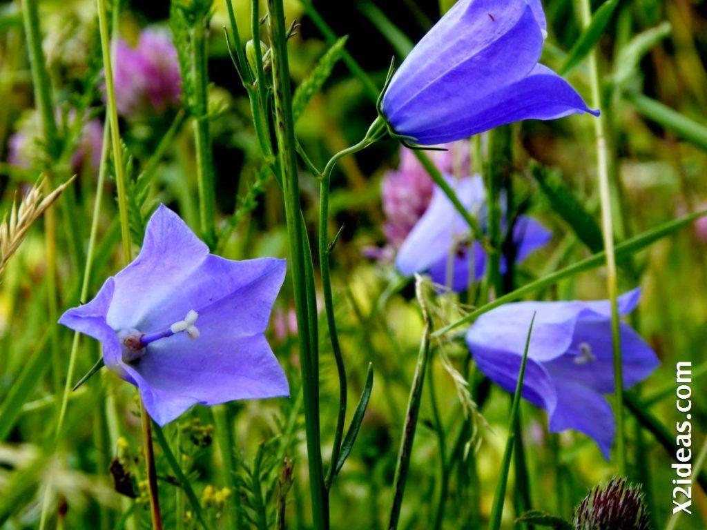 P1000805 1024x768 - Primavera o Verano da igual, Valle de Benasque, Pirineo.