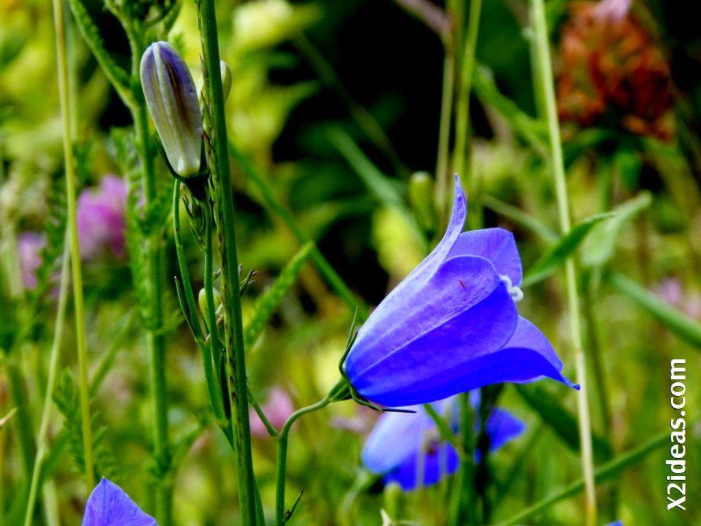 P1000806 1024x768 - Primavera o Verano da igual, Valle de Benasque, Pirineo.