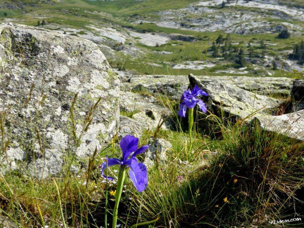 P1000845 1024x768 - Pues llegó el verano al Valle de Benasque, Pirineos.