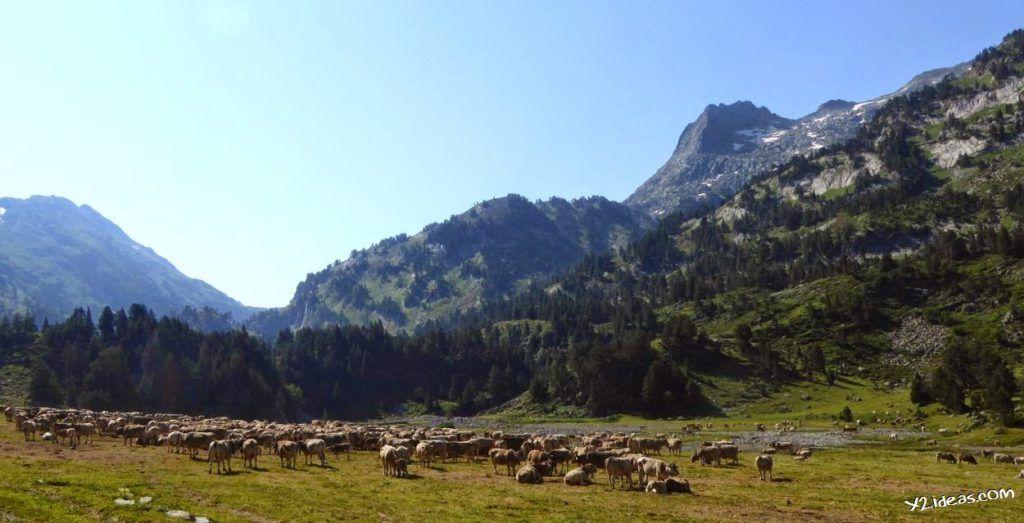 P1000848 1024x523 - Pues llegó el verano al Valle de Benasque, Pirineos.