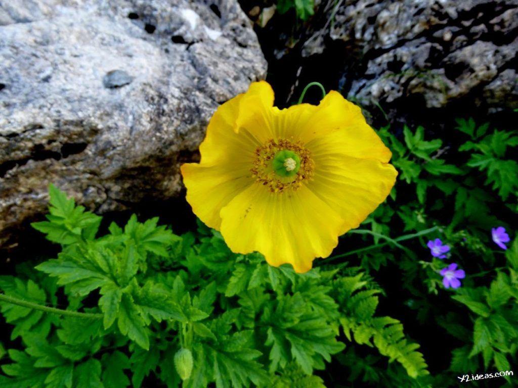 P1000852 1024x768 - Pues llegó el verano al Valle de Benasque, Pirineos.