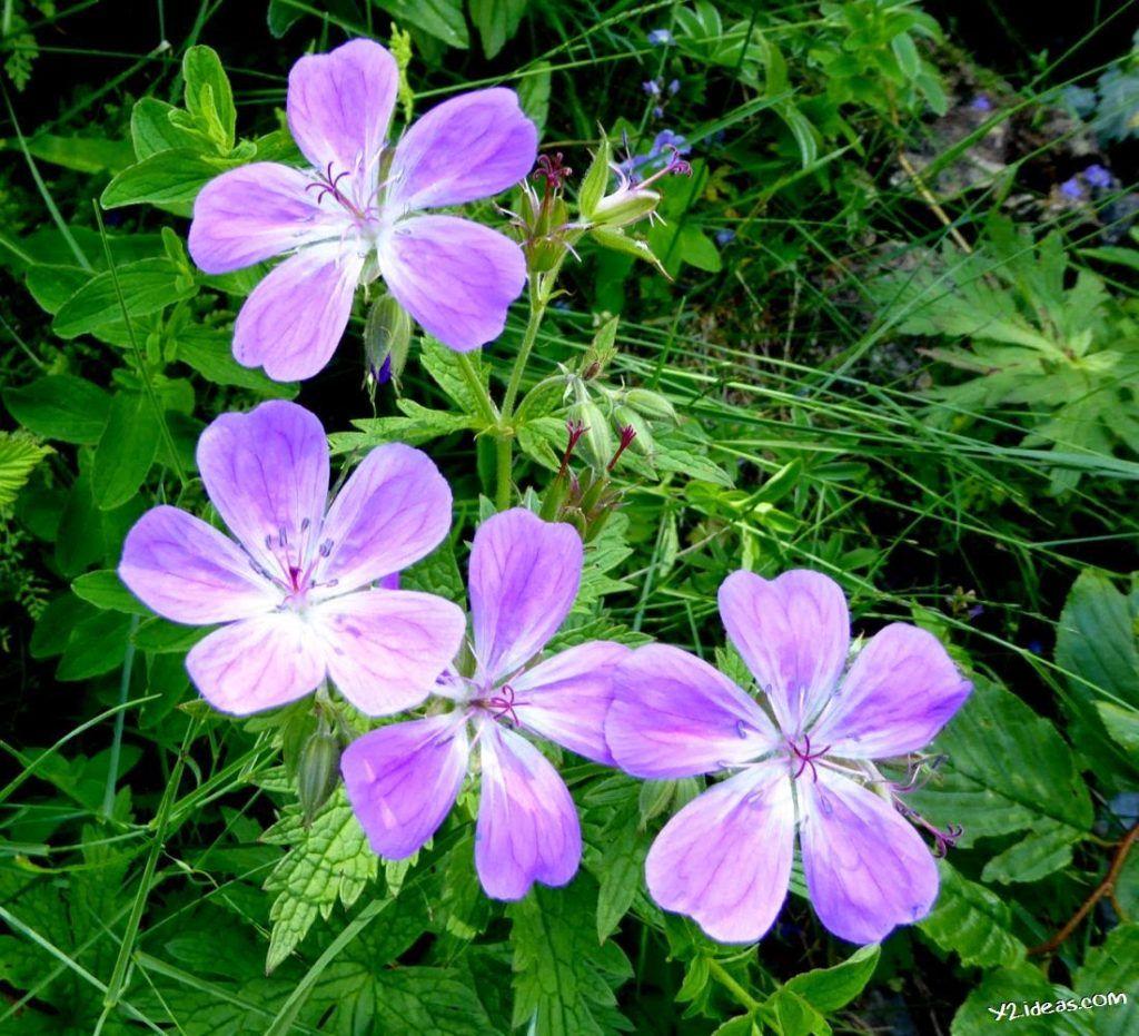 P1000855 1024x931 - Pues llegó el verano al Valle de Benasque, Pirineos.