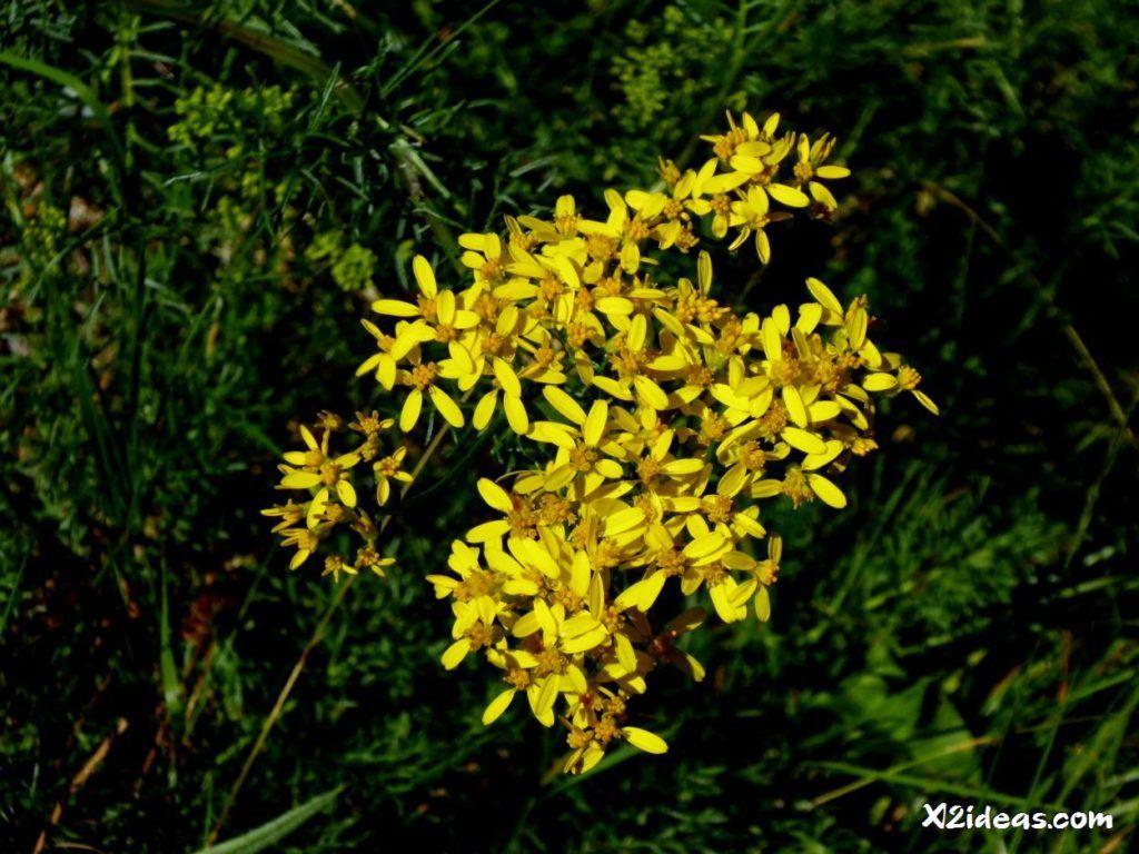 P1010313 1024x768 - Mientras recupero, flores y jazz  ... Valle de Benasque
