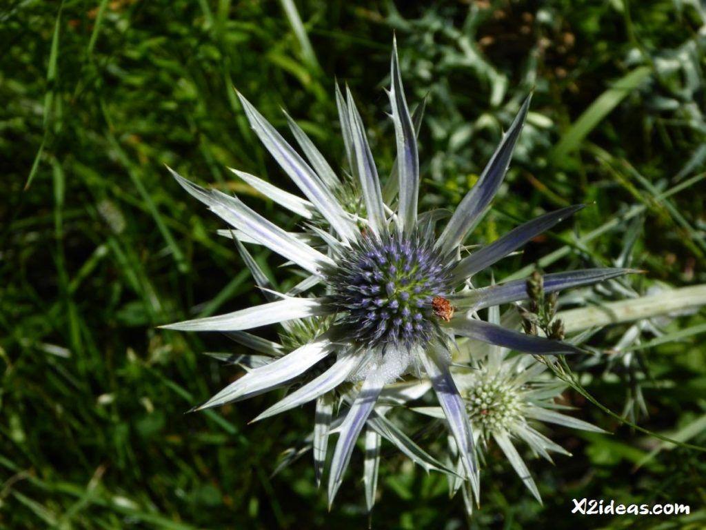 P1010314 1024x768 - Mientras recupero, flores y jazz  ... Valle de Benasque