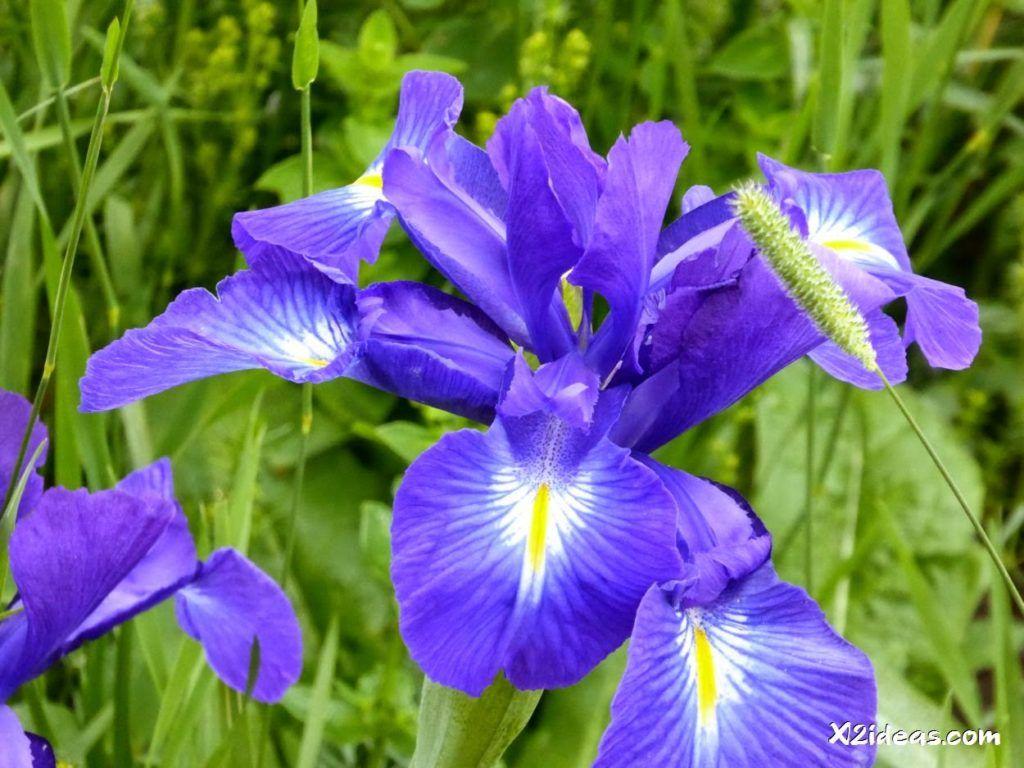 P1010318 1024x768 - Mientras recupero, flores y jazz  ... Valle de Benasque