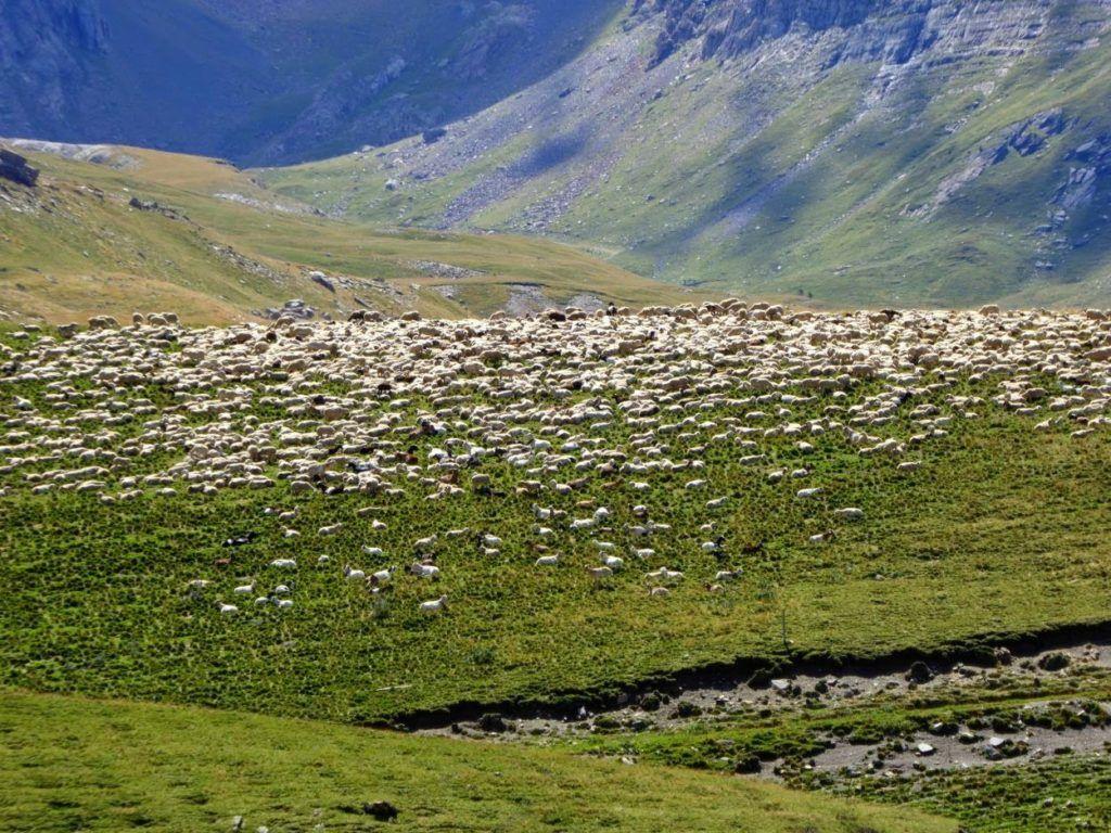 P1010976 1024x768 - Puesta a punto del pie por el Valle de Benasque.