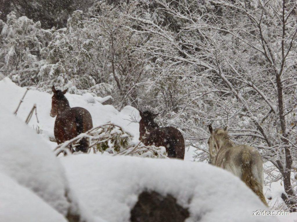 P1040275 1024x768 - Noviembre empieza con nieve en Cerler y el Valle de Benasque.