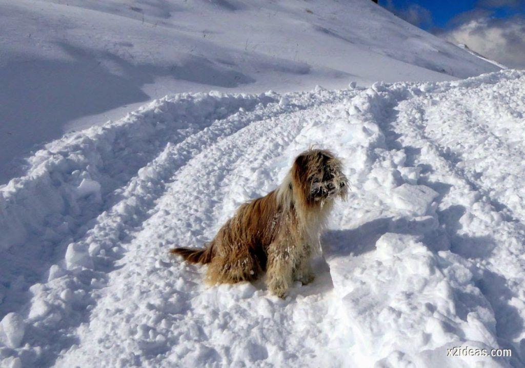 P1040439 1024x717 - Primera cata de nieve, Gallinero pero en raquetas.