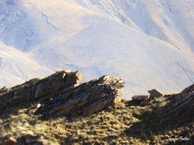P1170421 - Gallinero tour, 2732 m.