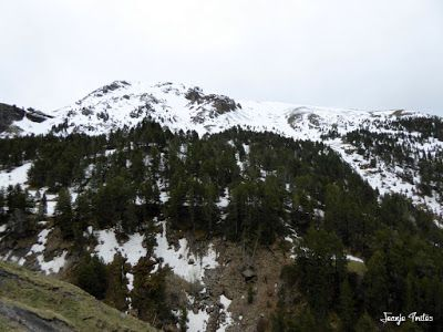 P1250237 - Nevadita en la Tuca de Castanesa 2 858m. Valle de Benasque.