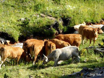 P1270661 - Entre sarrios por Ardonés, Valle de Benasque.
