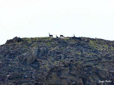 P1270665 - Entre sarrios por Ardonés, Valle de Benasque.