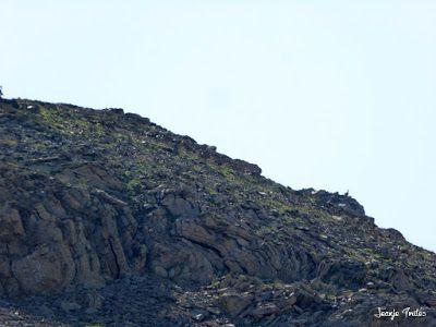 P1270671 - Entre sarrios por Ardonés, Valle de Benasque.