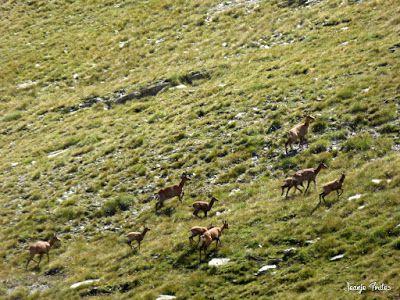 P1270708 - Entre sarrios por Ardonés, Valle de Benasque.