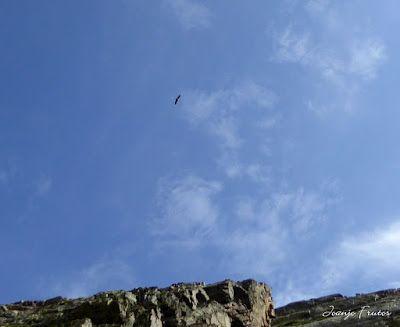 P1280416 - Subiendo al pico Sacroux, Valle de Benasque