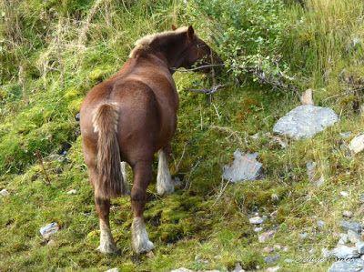P1290592 - Andorra, el verdadero país de los Pirineos.