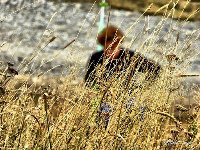 P1300049 fhdr - Buscando setas en familia por Cerler, Valle de Benasque.
