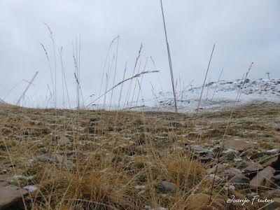 P1300127 - Nevada, ilusiones y Gallinero de Cerler (Valle de Benasque)