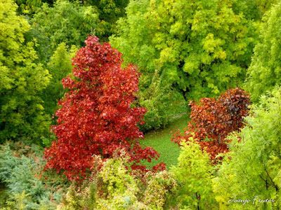 P1300305 - Llegó el otoño de verdad, Valle de Benasque.