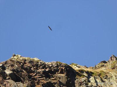 P1300676 - Coll de Toro, Valle de Benasque con Vall d'Aràn.