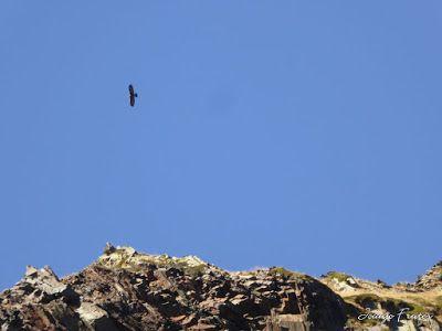 P1300677 - Coll de Toro, Valle de Benasque con Vall d'Aràn.