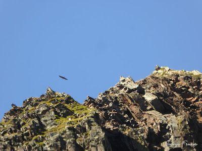 P1300678 - Coll de Toro, Valle de Benasque con Vall d'Aràn.