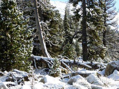 P1300937 - Primera nevada de noviembre en el Valle de Benasque.