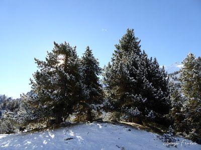 P1300961 - Primera nevada de noviembre en el Valle de Benasque.