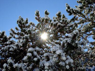 P1310002 - Primera nevada de noviembre en el Valle de Benasque.